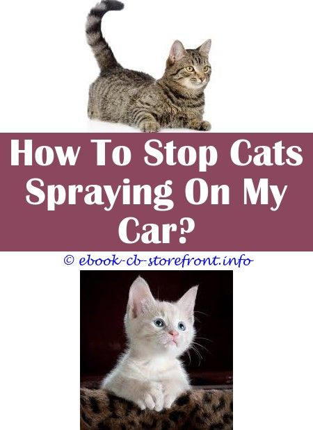 19 Fetching Stop Male Cat Spraying Inside House Admirable