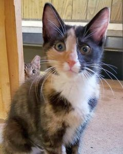 Reward Offered For Former Feral Cat Stolen From Indiana Tnr Organization Feral Cats Cats Animals
