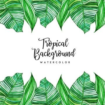 Watercolor Tropical Floral And Leaves Background Watercolor