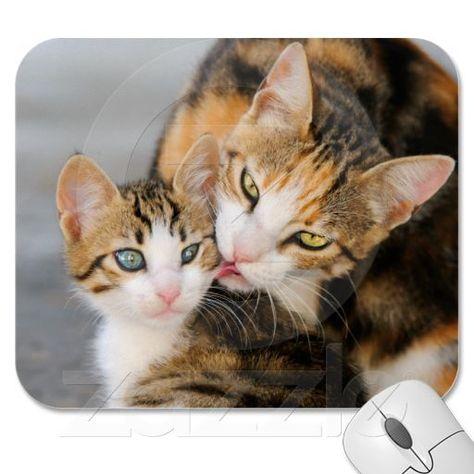 #cat #catlovers