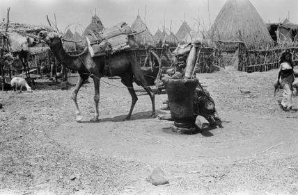 صور نادره من تهامة العام 1945ـ 1947 م منتديات جازان Rare Pictures Pictures Horses
