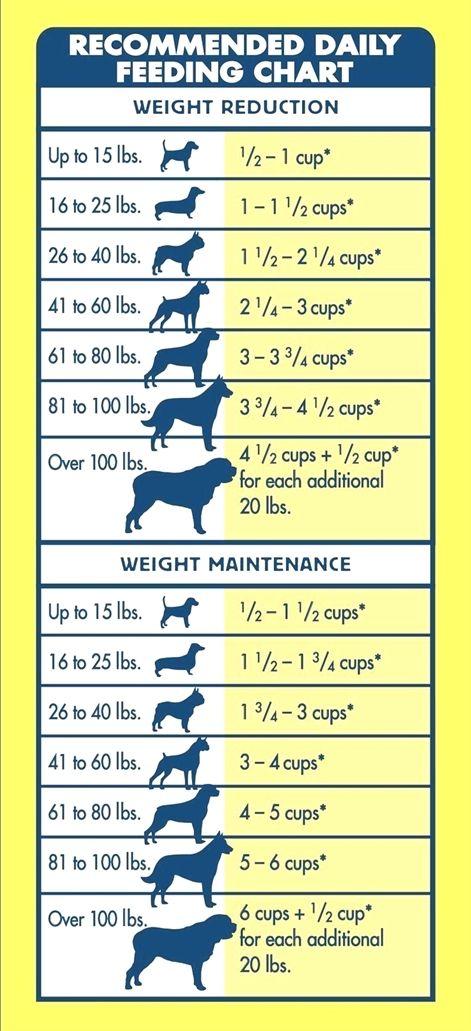 Dog Training Gone Wrong Dog Training Online Dog Training Tricks