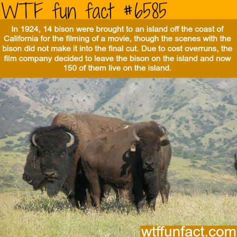 animals facts