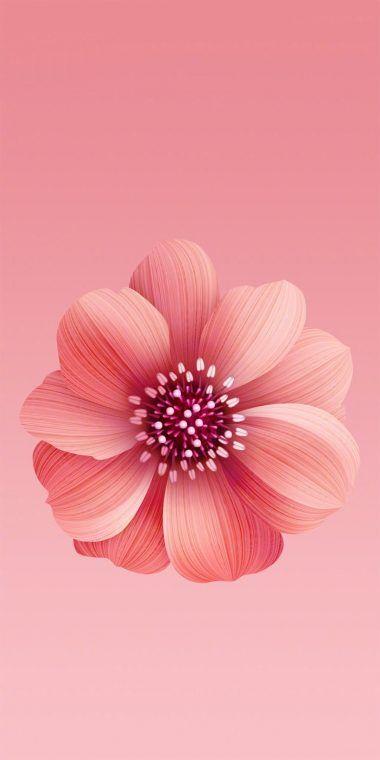 Xiaomi Mi 6x Stock Wallpaper 2 1080x2160 Flower Iphone