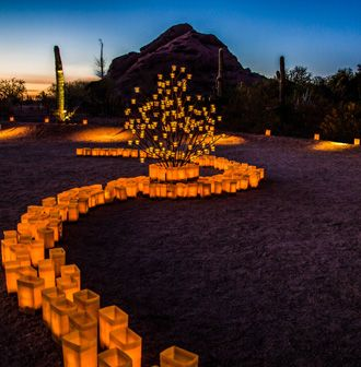 78bef2f8698bff37dc6893ce8282401c - Tucson Botanical Gardens Luminaria Night 2019