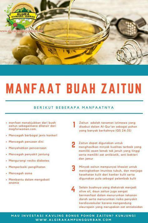 Manfaat Buah Olive