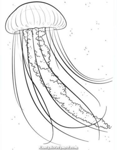 Spektakular Ausmalbilder Qualle Kategorien Quallen Kostenlose Malvorlagen Zum Ausdrucken Zeichnung Tutorial Fisch Zeichnung Ozean Zeichnung