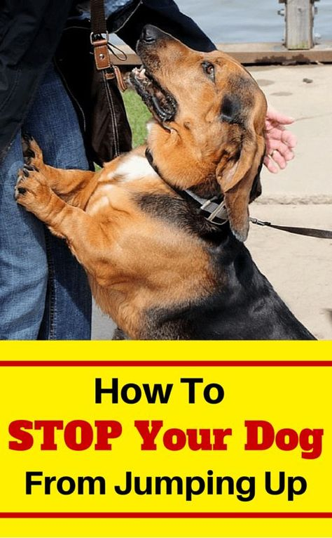 Train Your Dog Not To Jump Up On People Learn The 4 Most