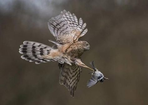 Winners Of The British Wildlife Photography Awards - Amazing winners from the 2016 british wildlife photography contest