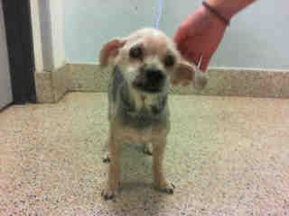 Www Petharbor Com Animal Search Adoptable Find Pets Animal Shelter Humane Society