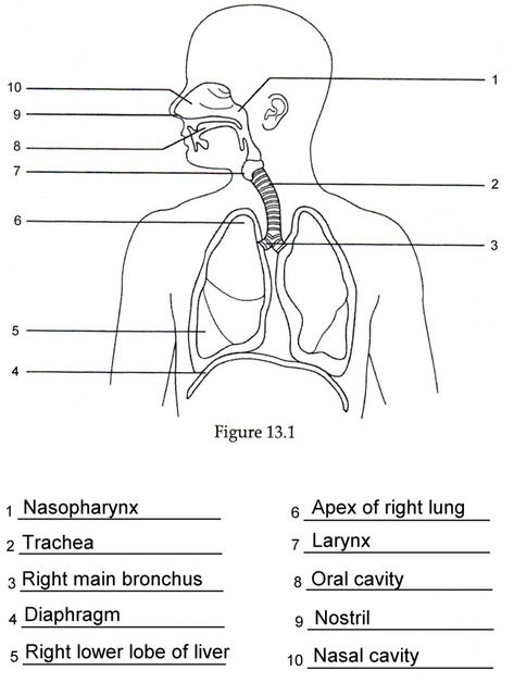 Image result for anatomy labeling worksheets | anatomy and ...