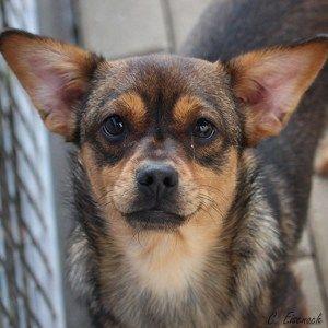 Blindenhund Ersatz Fur Augen Mit Bildern Blindenhund Hunde