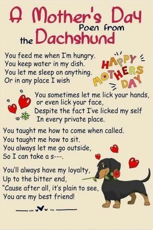 Find Out More On The Dachshund Dogs Personality Dachshundcorner