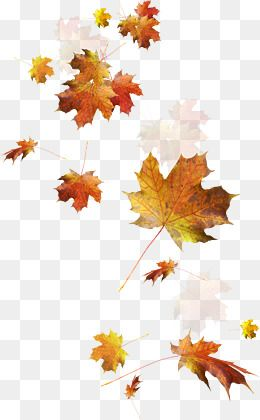 Falling Leaves Leaves Fall Shriveled Png Transparent Clipart