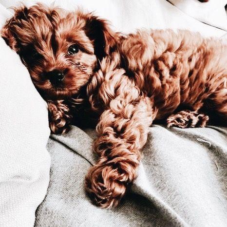 ᴘɪɴᴛᴇʀᴇsᴛ ᴄʜᴀʀᴍsᴘᴇᴀᴋғʀᴇᴀᴋ Cute Animals