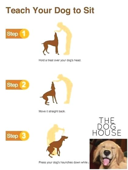 Dog Training Cesar Millan Dog Training Pdf Pitbull Dog Training