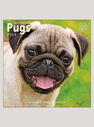 2019 Pugs 12 X 12 Wall Calendar 2019 Calendar Wall Calendar
