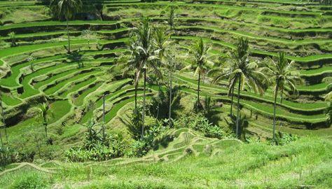 Ubud Wisata Di Bali Tempat Wisata Bali Ubud Bali Bali