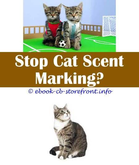 5 Great Tips Litter Box For Cat Who Sprays Service Cat Pepper Sprayed Cat Lice Spray Petco Naturvet Herbal Flea Spray For Cats Ho Cat Spray Cats Cat Repellant
