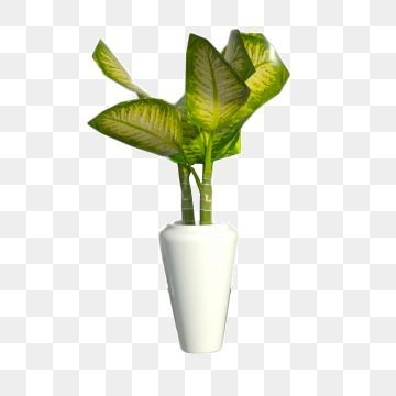 Potted Indoor Green Plant Download Potted Plants Indoor Green Plants Home Plants Png Transparent Clipart Image And Psd In 2020 Indoor Green Plants Plants Green Plants
