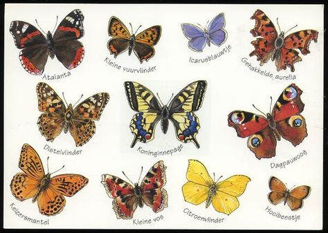 Byttrefly Different Butterflies With Names Store Item Ivanhoe84241 Butterfly Pictures Types Of Butterflies Butterfly Species