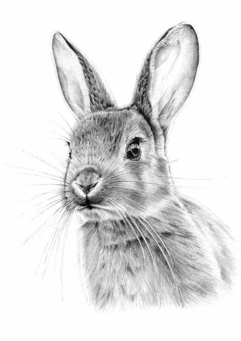 Immagini Da Disegnare A Matita Disegno Di Un Coniglio Arte Coniglietto Disegnare Animali Dipinti Di Animali