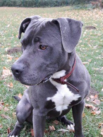 Plz Bereich 4 Kampfschmuser Vermittlungshilfe Pitbull Welpen Ausgestopftes Tier Tiere Und Haustiere