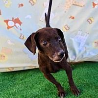 Available Pets At Humane Society Of Imperial County In El Centro