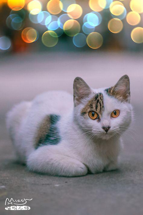 Cats Katzen | Katzen, Hund und katze, Haustiere