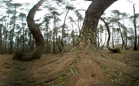 Best Unexplained Mysteries Images On Pinterest Unexplained - To this day the mystery of polands crooked forest remains unexplained