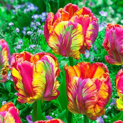 795926226f3506dac3cb69ebfe5ea2b7 - Rose Lawn Memorial Gardens Brownsville Tx