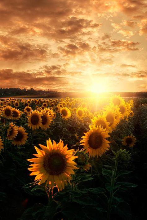 I wish you a beautiful new day Twitterworld ♡