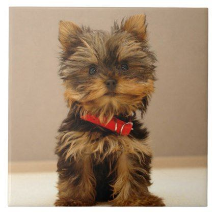 Cute Yorkshire Terrier Ceramic Tile Yorkshire Terrier Puppy Terriers Dog Dogs Pet Pets Cute Yorkshireterrier Cute Small Dogs