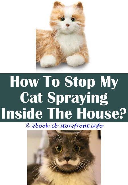 cat spray kayu
