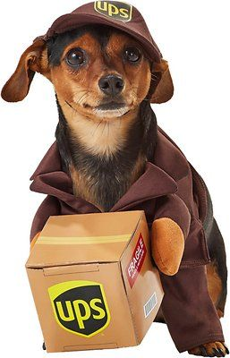 California Costumes Ups Delivery Driver Dog Costume Small Chewy