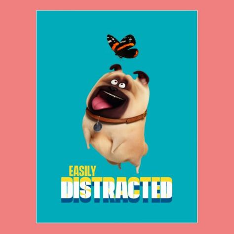 The Secret Life Of Pets 2 Trailer Max Hates Going To The Vet Secret Life Of Pets Pet Max Secret Life