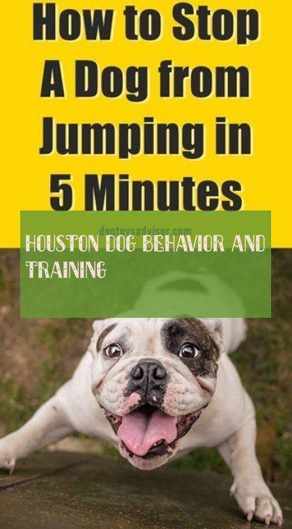 Houston Hundeverhalten Und Training Houston Dog Behavior And