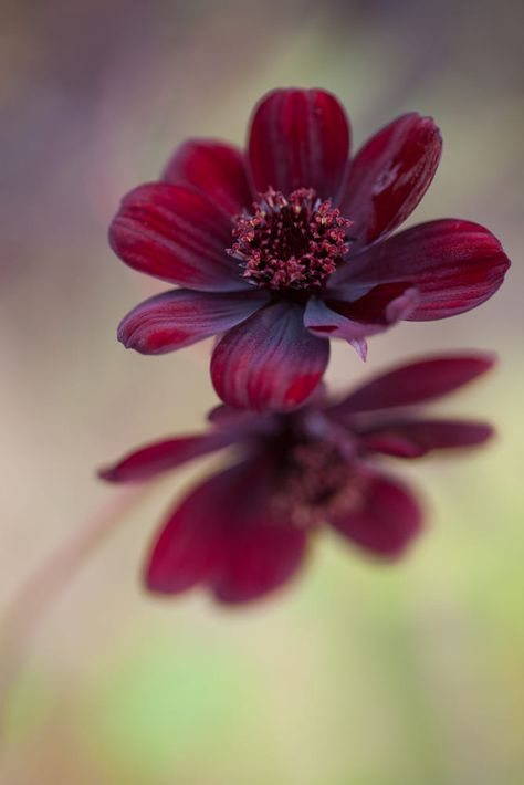 A Few Left by Connie Etter / 500px