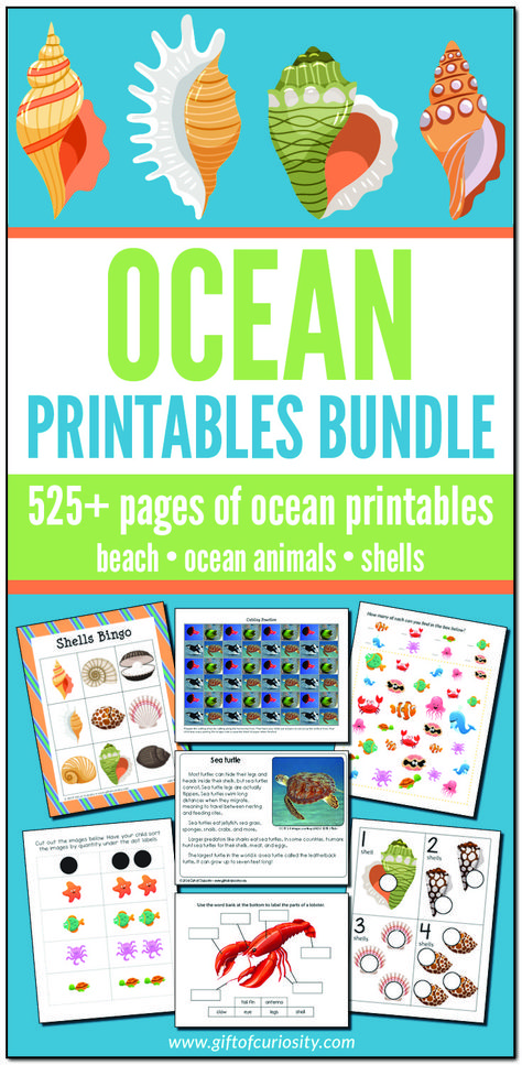 The Ocean Printables Bundle features more than 525 pages of ocean printables focused on ocean animals, the beach, and shells. This bundle includes printables appropriate for toddler age through elementary age, and will be an invaluable resource for any study of the ocean. #ocean #printables #giftofcuriosity #STEM #STEAM #science || Gift of Curiosity