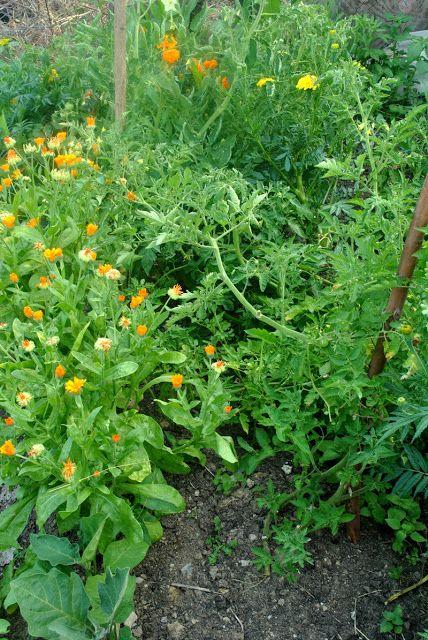 nematod în grădină