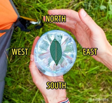 11 Wilderness Survival Tips - Make a DIY leaf compass with water, a leaf, and a needle. survival tips 11 Wilderness Survival Tips That Could Save Your Life Survival Life Hacks, Survival Supplies, Survival Food, Camping Survival, Outdoor Survival, Survival Knife, Survival Prepping, Survival Skills, Survival Quotes