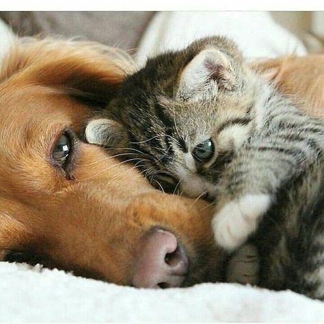 Amour de chat 😺 #chien #chat #chaton