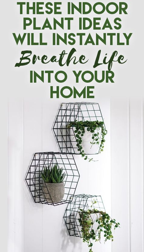 These Indoor Plant Ideas Will Instantly Breathe Life Into Your Home