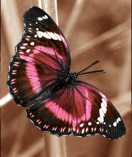 Https Www Youtube Com Watch V Lqyu6yiwlti In 2021 Butterfly Species Butterfly Pictures Beautiful Butterfly Photography