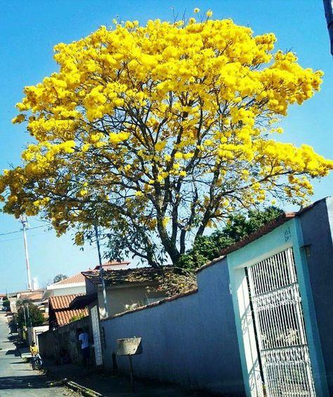 Florestal Minas Gerais fonte: i.pinimg.com