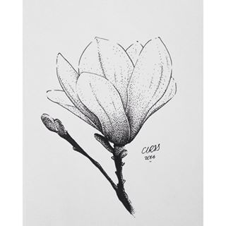 magnolia flower illustration - Google Search                                                                                                                                                                                 More