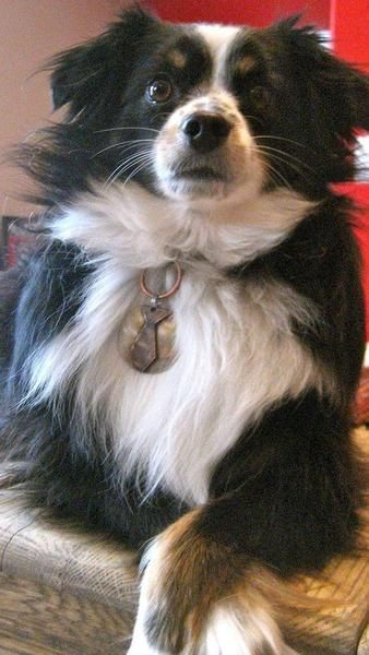 Mr Wendal Pet Tag Pet Tags Every Dog Breed Dog Tags