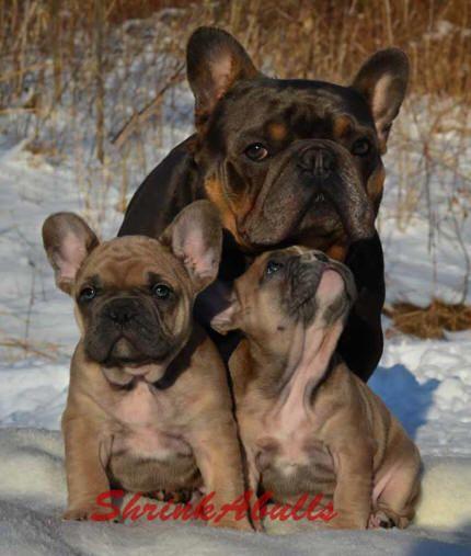 Naming your French bulldog, French names