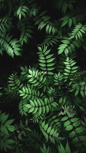 Fern Wallpaper Iphone Nature Green Leaf Wallpaper Fern