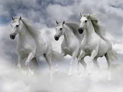 Dream Horses 061
